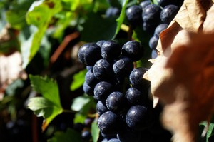 Merlot is a Bordeaux wine made with black grapes.
