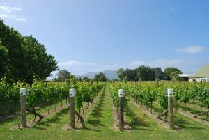 Visit a wine tasting during the month of August